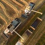 Более двадцати омских сельхозпроизводителей зерна вошли в список экспортеров
