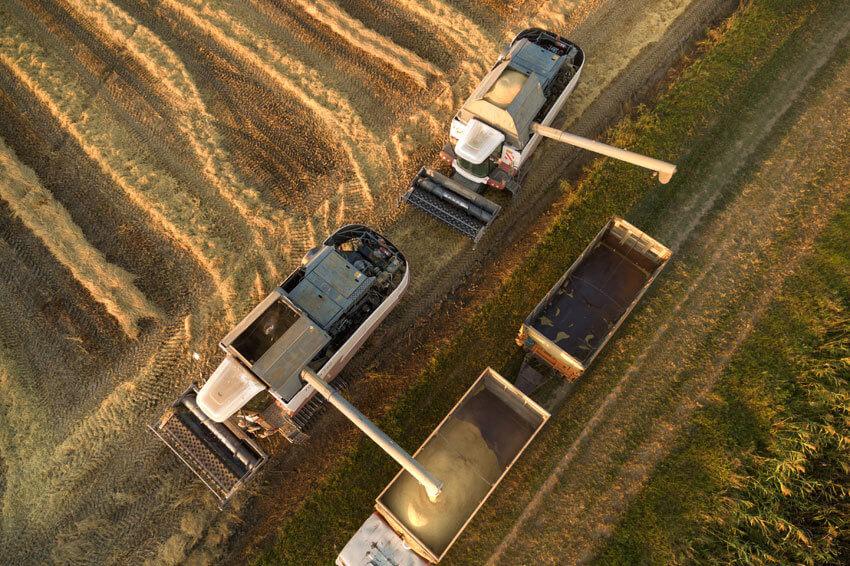 Омские аграрии будут поставлять пшеницу в Китай