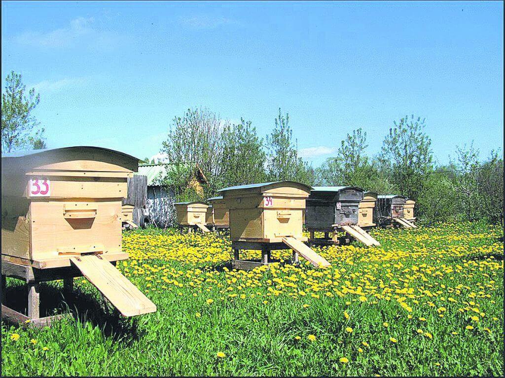 Разведения среднерусских пчел