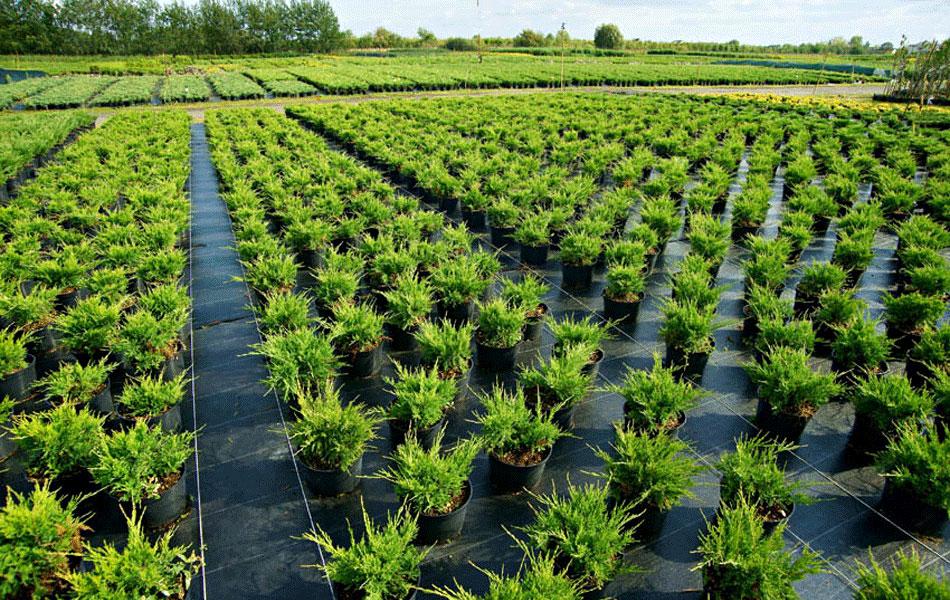 на дальневосточном гектаре в Якутии разобьют питомник декоратвиных растений