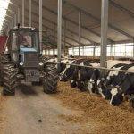 В  Старокулаткинском  районе Ульяновской области проблемы со сдачей молока