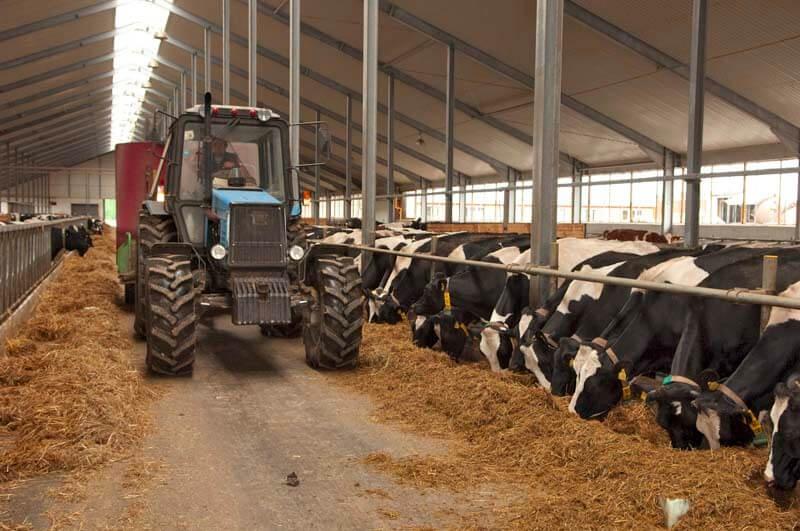 отсутсвие рынка сбыта молока привело ульяновских фермеров к решению создать кооператив