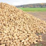 Подведение итогов и перспективы развития агропрома в Липецкой области