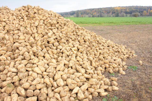 Липецкая область собрала рекордный урожай сахарной свеклы