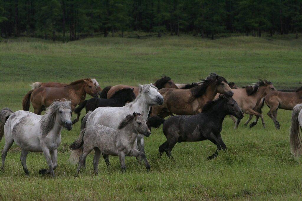 Развитие коневодства