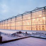 В Новосибирской области  введен в эксплуатацию новый тепличный комбинат