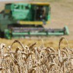 В этом году Россия стала рекордсменом по сбору зерна