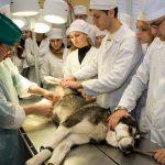 Нехватка ветеринарных специалистов в Тамбовской области