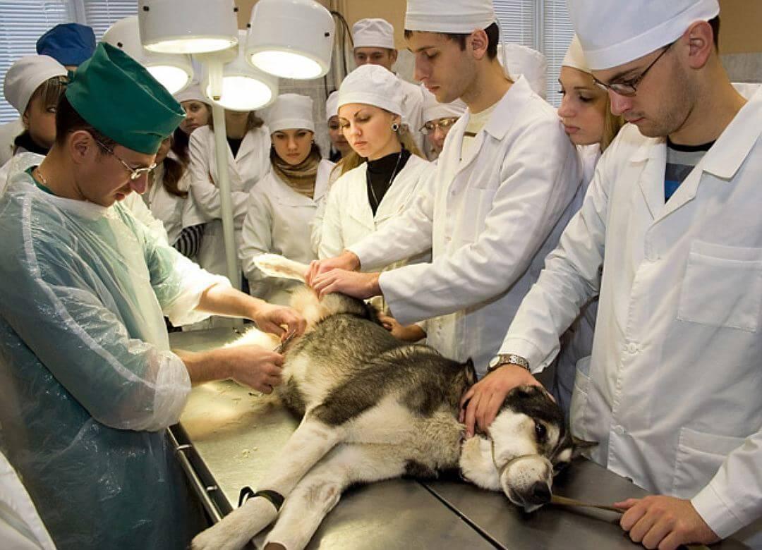 Развитие животноводческой отрасли требует квалифицированных веетринаров