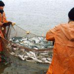 Рыбаки Ямала бьют прошлогодние рекорды по добыче рыбы