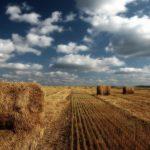 В законе об обороте земель сельхозназначения грядут изменения