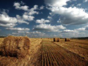 сельхозземли