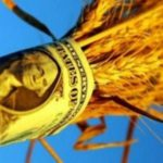 Самая высокая цена зерна ожидается в январе 2017 года