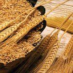 В Челябинской области аграрии вышли на международный рынок сбыта