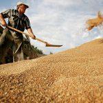На Втором Всемирном зерновом форуме в Сочи экспорту зерна Россией уделят особое внимание