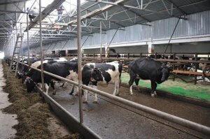 ОТкрыта новая ферма в Калачевском районе