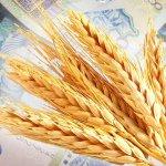 В следующем году субсидии для сельхозпроизводителей будут объединяться