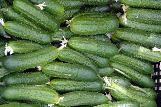 САхалинская обасит развивает тепличные хозяйства