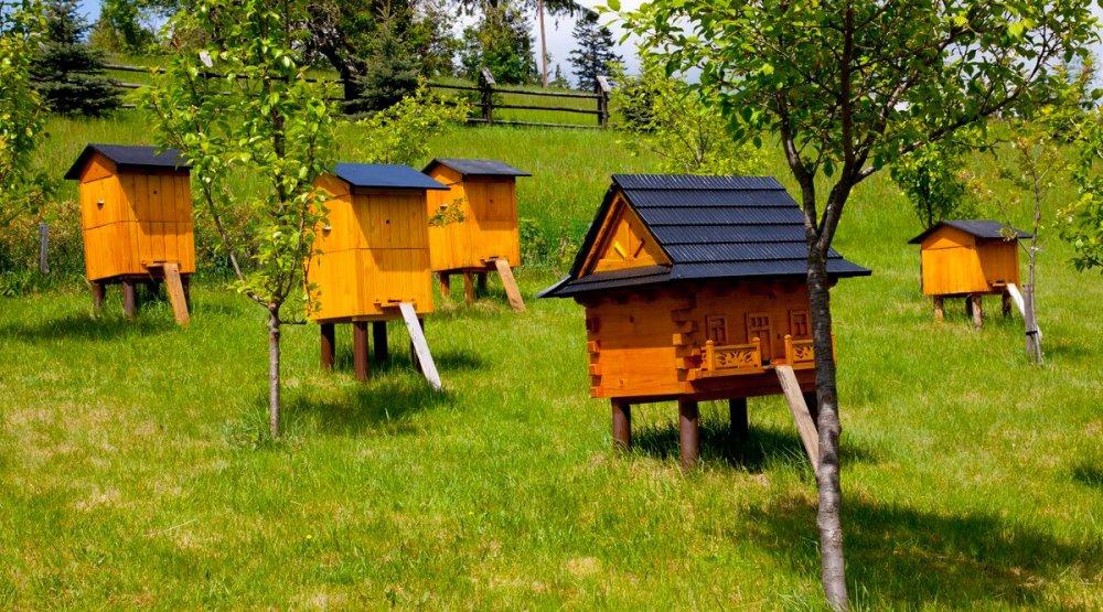 "Закон ""О пчеловодстве"" обсуждали производители меда в Севастополе."
