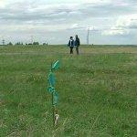 В Ленинградской области проводится работа вовлечению в оборот сельскохозяйственных земель