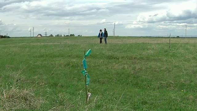 В Лениградской области успешно вовлекают пустующие землив севооборот