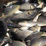 В Тверской  области определили границы рыбоводных участков