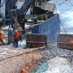 Россия и Гренландия утвердили территории лова промысловой рыбы