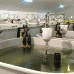 Россия и Дания будут сотрудничать в сфере аквакультуры