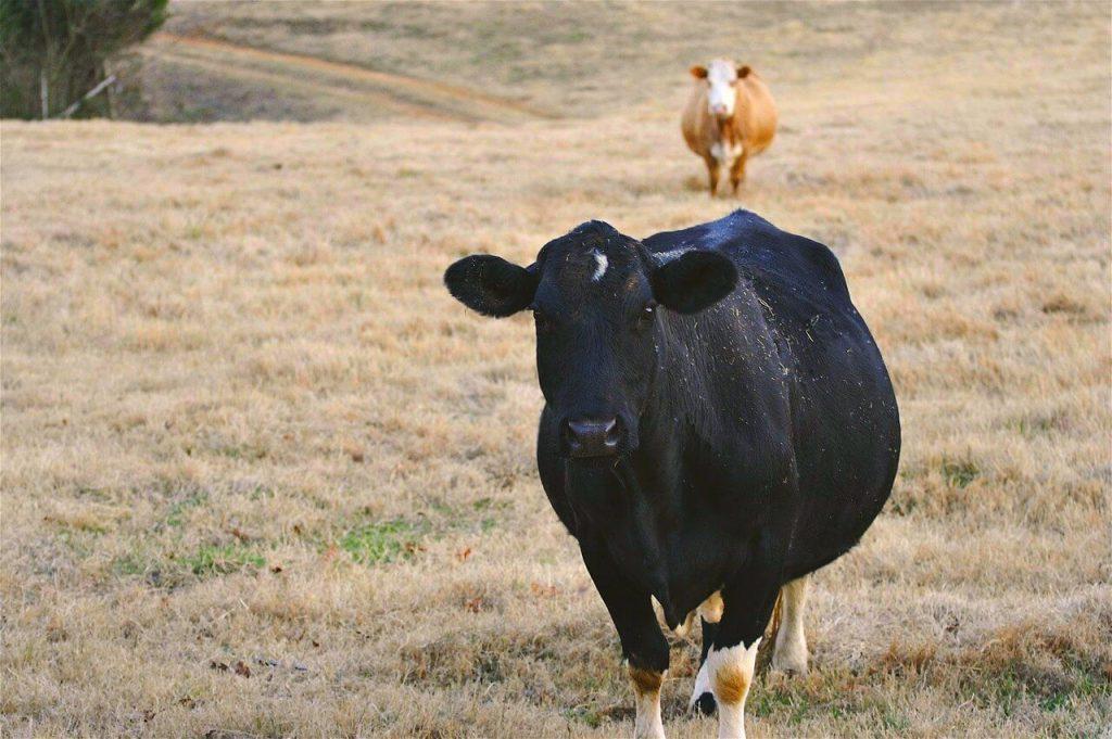 ПРиморцы-сельчане получат по 2 тонн сена
