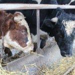 Министерство  сельского хозяйства Карачаево-Черкесской Республики контролирует грантополучателей