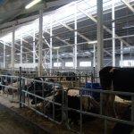 В Рязанской области на средства, полученные в виде гранта, молодой фермер завершает строительство фермы