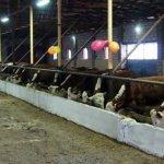 В Калужской области открыта новая животноводческая ферма