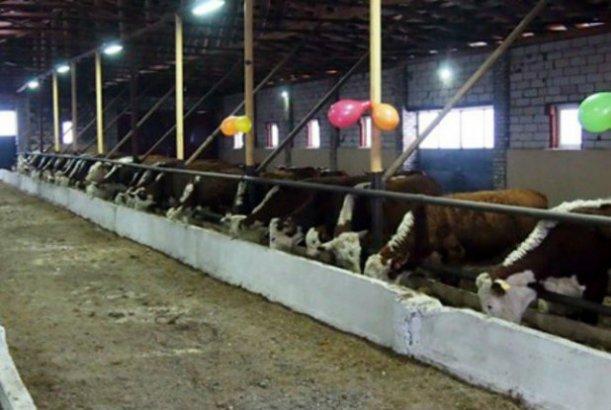 В Калужской области развиваются семейныке фермы
