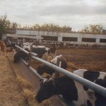 В Калужской области появилась еще одна животноводческая ферма крупнорогатого скота