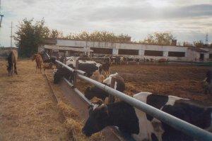 В Калужской области открылась очередная ферма КРС
