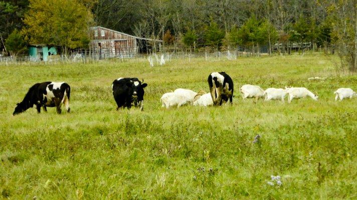 В Аткарском районе подерживают сельское предпринимательство