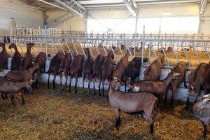 В Свердловской области наладят производство сыров с белой плесенью