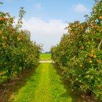 В Калининрадской области наращивают производство собственной плодово-ягодной продукции
