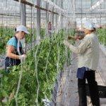 В Чувашской Республике агрофирма «Ольдеевская» ввела в эксплуатацию новую теплицу