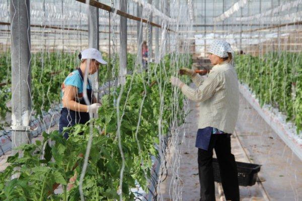 В Чувашской Республике введена в строй новая теплица