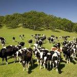 В Республике Татарстан чествуют сельхозпроизводителей – получателей грантов