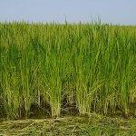 Сельскохозяйственные кооперативы  Кубани получат господдержку