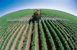 Объем овощеводства в России