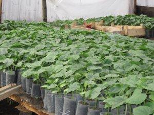 Тепличное овощеводство