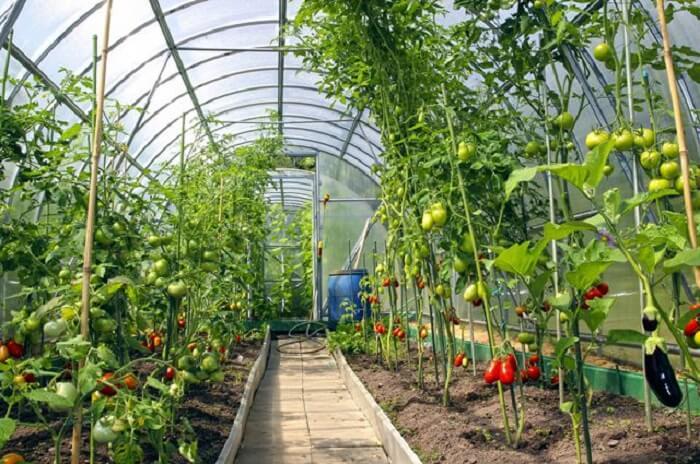 Картинки по запросу овощеводство