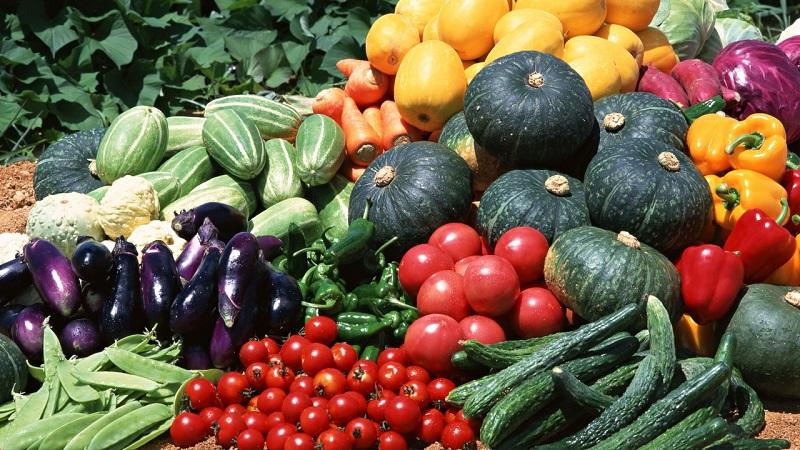 Овощеводство: виды и технология выращивания в России
