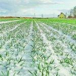 Алтайские сельхозпроизводители в 2017 году получат двойную поддержку государства