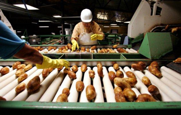 В липецкой обалсти увеличивают производство картофеля