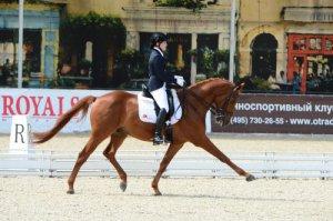 Спортивный выездковый конь буденновской породы