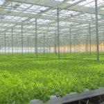 В предприятии  АО «Тепличное» прошел семинар по увеличению объема выращивания овощей закрытого грунта